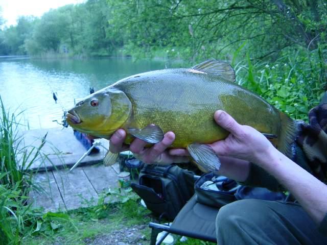 линь рыба ловля на удочку
